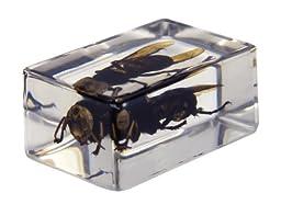 Celestron 44408 3D Bug Specimen Kit #2 (Green, Yellow, Black, Brown)