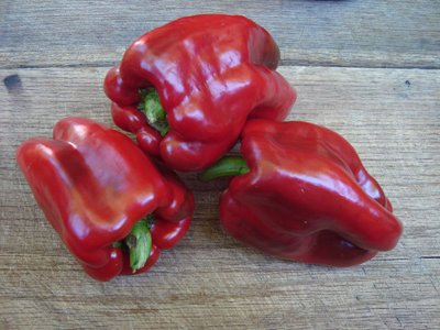 David's Garden Seeds Pepper Bell Napoleon Sweet D46130Q (Red) 25 Organic Heirloom Seeds