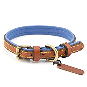 PetsUp Royal Leather Dog Collar Neck Belt 1 pc. for Neck Size 11.0 to 13.5 inches