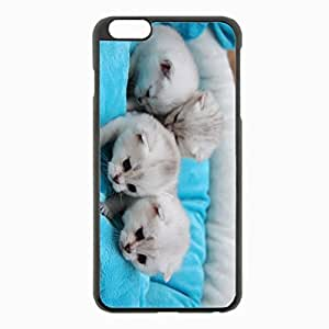 iPhone 6 Plus Black Hardshell Case 5.5inch - kittens young lie Desin Images Protector Back Cover