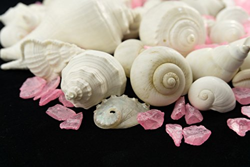 White Decorative Sea Shells with Pearlized Light Pink Sea Glass Chips |1 Pound for Decoration | Shells for Craft | Nautical Crush Trading TM