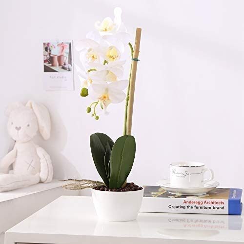 IMIEE Phaleanopsis Arrangement with Vase Decorative Artificial Orchid Flower Bonsai - Orchid Plastic