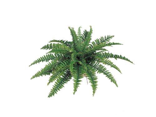 Fern Silk Plant - Larksilk Boston Fern Artificial Plants Fake Silk Indoor or Outdoor Plant 34