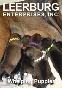Whelping Puppies DVD