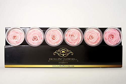 - EXCELLENT FLOWERS INC. Preserved Rose Growers (Light Pink, Medium 6 Pack) Natural Roses That are Long Lasting/Eternity Roses/Rose Growers