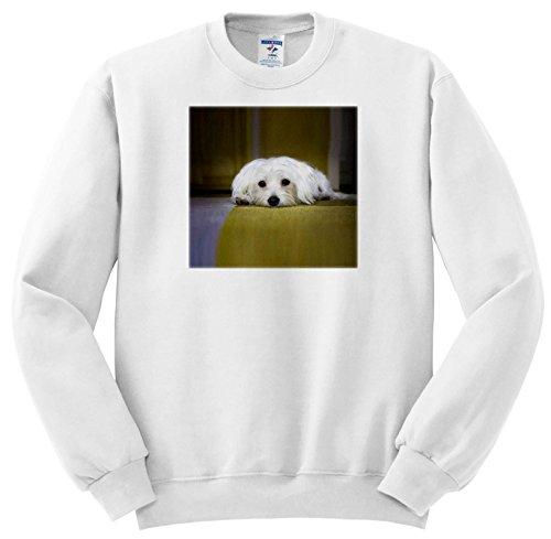 3dRose RinaPiro Dogs - Maltese. Cute Puppy. - Sweatshirts - Youth Sweatshirt XS(2-4) (ss_282827_9)