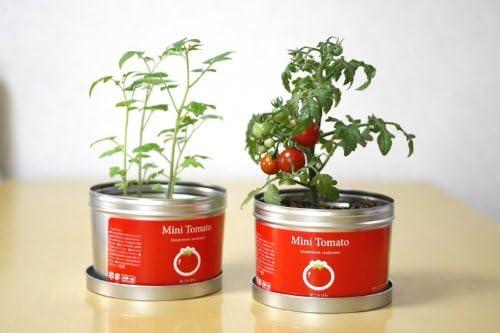 家庭菜園におすすめの植物を紹介