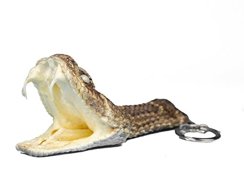 (Chichester Inc Real Rattlesnake Head Keychain : Wide Open Mouth)