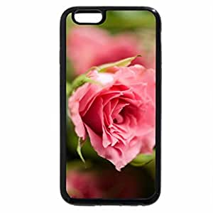 iPhone 6S / iPhone 6 Case (Black) Pink roses