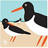 I Like Birds: Oyster Catcher Boxed Notecards (Stationery)