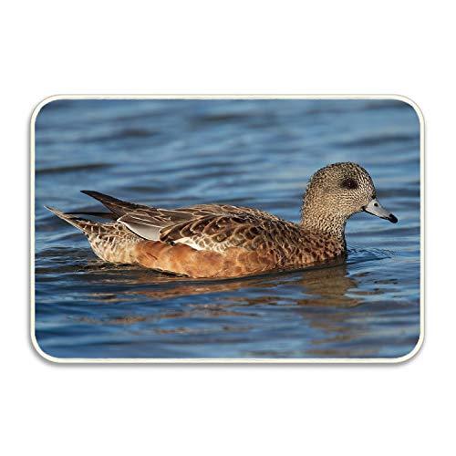 huangyan Animal American Wigeon Birds Ducks 18