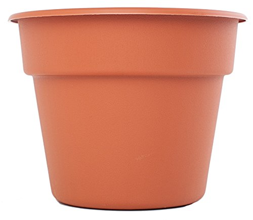 (Bloem DC12-46 Dura Cotta Planter, 12-Inch, Color - Terra Cotta)