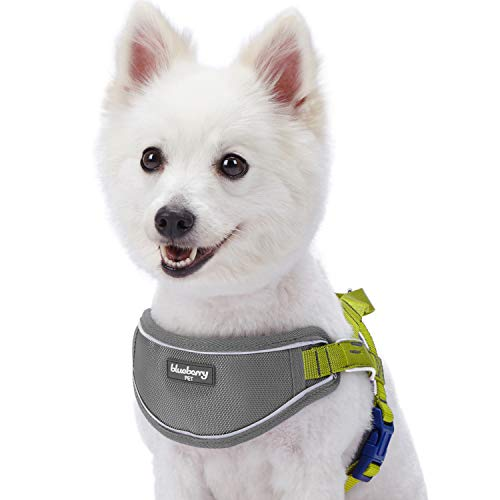 Blueberry Pet 5 Colors Soft & Comfy 3M Reflective Strips Padded Dog Harness Vest, Chest Girth 17 - 19.5, Citrus Lime, XS/S, Nylon Adjustable Training Harnesses for Dogs