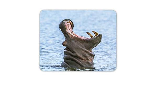 Amazon com : Wild Hippopotamus Mouse Mat Pad - Hippo Animal Africa