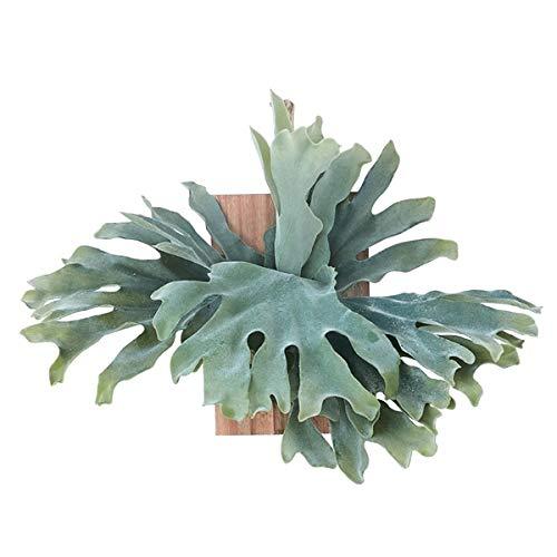 人工観葉植物 ビカクシダウォールハンギングアカシア30(1個) bb290 壁掛けタイプ (代引き不可) インテリアグリーン 造花 HANGING B07SXGG3Z2
