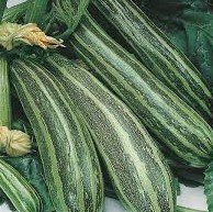 Cocozelle Summer Squash- 25+ Seeds Per Packet