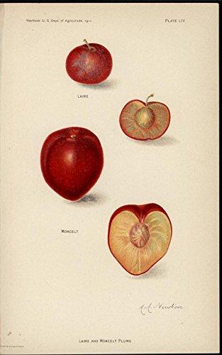 - Plums fruit Laire Moncelt 1911 beautiful antique color lithographed print