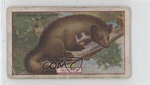 Marten Ungraded COMC Poor to Fair (Trading Card) 1921 Gallaher Animals & Birds of Commercial Value - Tobacco [Base] #8 from Gallaher Animals & Birds of Commercial Value