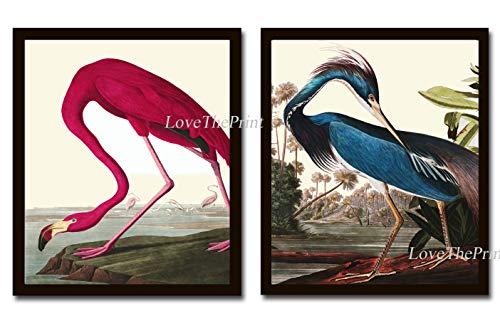 Audubon Birds Wall Art Print Set of 2 Prints Beautiful American Pink Flamingo and Louisiana Blue Heron Home Room Decor Wall Art Unframed
