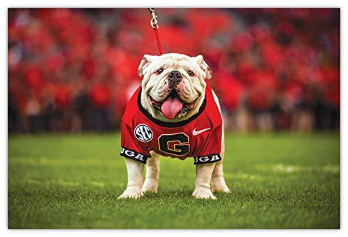 UGA Georgia Bulldogs: UGA X Mascot Photo Art Poster - Extra Large (24