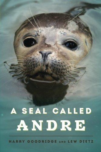 seals the animal - 7