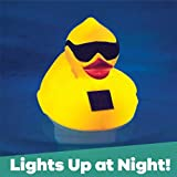 GAME 12301-BB Solar Light-Up Derby Duck Mid-Size