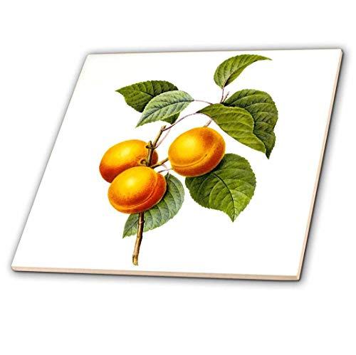 3dRose ct_106849_2 Redoute Vintage Watercolor Fruit Apricot-Peach Prunus Sp-Ceramic Tile, 6