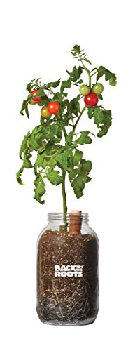 Back to the Roots Organic Cherry Tomato Self Watering Planter, Grow Cherry Tomatoes Year Round, Windowsill Indoor Garden Kit (Best Herbs To Grow In Pots Indoors)