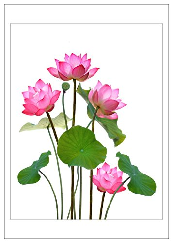 NW Pitney Ink Lotus Grouping Blank Greeting Card