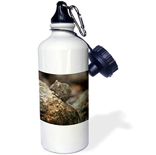 3dRose Stamp City - Animals - Close up Photograph of a Field Mouse on a Moss Covered Boulder. - 21 oz Sports Water Bottle (wb_304364_1)