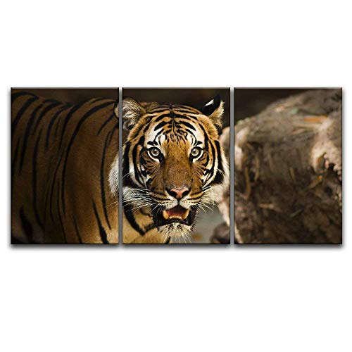 3 Panel A Tiger Staring at The Front x 3 Panels