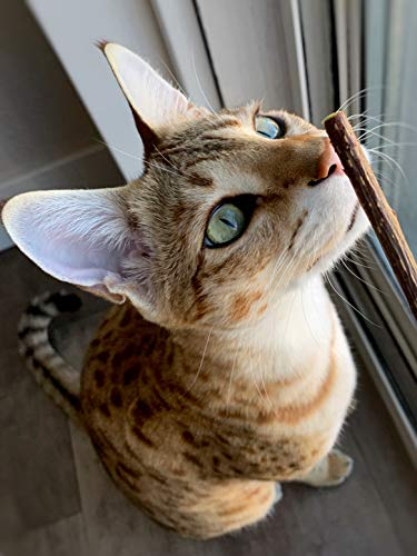 Meowy Janes Matatabi Chew Sticks - An All Natural Silvervine Cat Toy and Cat Treat - Catnip Alternative 7