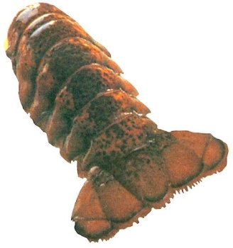 Charleston Seafood Frozen Lobster Tails, 32-Ounce Box