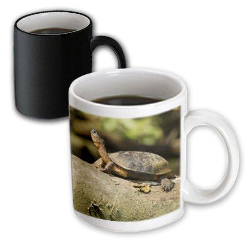 3dRose Costa Rica, Black Wood Turtle, Joe and Mary Ann McDonald, Magic Transforming Mug, 11-Oz