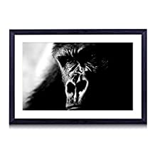 gorilla portrait-Wildlife - Art Print Black Wood Framed Wall Art Picture Black and White (16x12 inches Framed)
