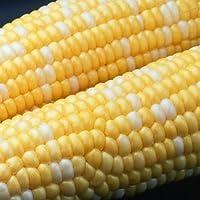 Peaches & Cream Sweet Corn Non GMO Seeds - 4 Oz, 500 seeds