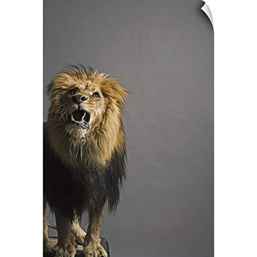 Lion Head Pedestal - CANVAS ON DEMAND Lion Roaring Wall Peel Art Print, 12