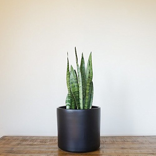 Large Black Planter | Plant Pot | Modern Design | Ceramic Cylinder | Plant Container| Garden Planter | Perfect for Indoor Plants, Succulents, House Plants & Plant Stands (10 inch, Black) (Black Pots Ceramic Garden)