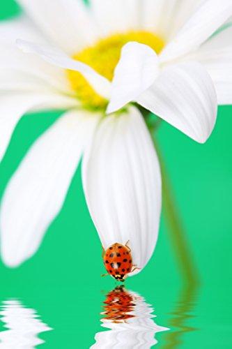 Canvas Prints Wall Art - Ladybug on a White Daisy Petal | Modern Wall Decor - 32