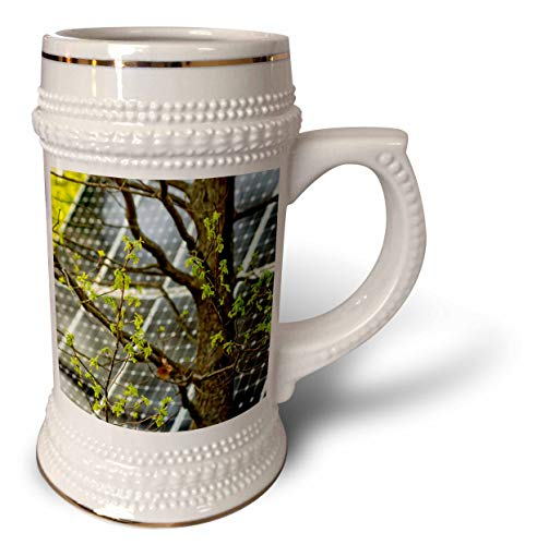 3dRose Alexis Photography - Objects - Oak tree with fresh leaves, solar power panel in the background - 22oz Stein Mug (stn_290827_1) by 3dRose
