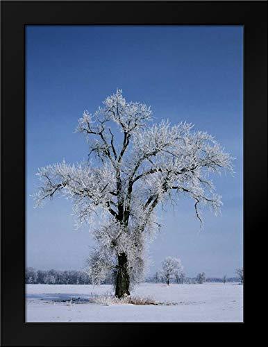 Canada, St Adolphe, Hoarfrost on Cottonwood Tree Framed Art Print by Grandmaison, ()