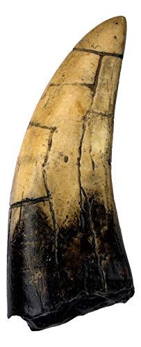 (T-Rex - Tyrannosaurus Rex Dinosaur Tooth Replica)
