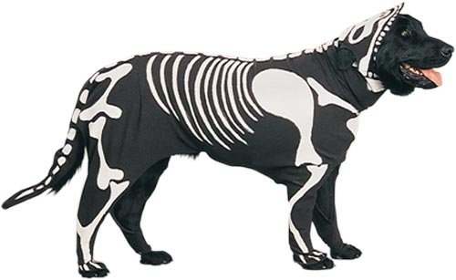 Pet Skeleton Dog Halloween Costume (Size Small)  sc 1 st  Amazon.com & Amazon.com: Pet Skeleton Dog Halloween Costume (Size: Small): Clothing