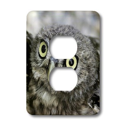 3dRose LLC lsp_9929_6 Little Owl, Athena Noctua, Aragon Spain Europe 4 2 Plug Outlet Cover by 3dRose