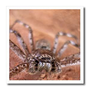 ht_46179_3 VWPics Northern - Huntsman spiders (Sparassidae) is a family of spiders also known as the giant crab spiders - Iron on Heat Transfers - 10x10 Iron on Heat Transfer for White Material