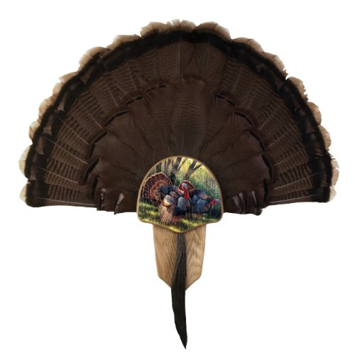 (Walnut Hollow Country Turkey Fan Mount & Display Kit, Oak with Spring Strut Image)