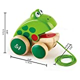 Hape Frog Pull-Along|Wooden Frog Fly Eating