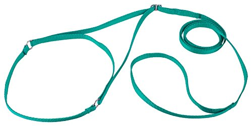 Country Brook Design Nylon Martingale Dog Show Lead - Teal -