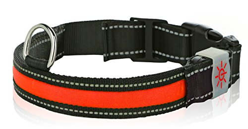 (Light Up Rechargeable LED Nylon Dog Collar with 3 Light Settings and Metal Buckle - Includes USB Charger - Keep Pet Safe and Visible 3 Sizes (Medium, 1 x 19.5 in, Red))