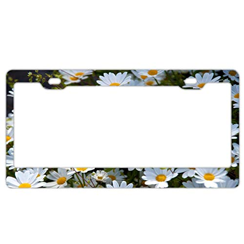 YEX Abstract April White Daisies License Plate Frame Novelty Car Tag Frame Auto License Plate Holder 12